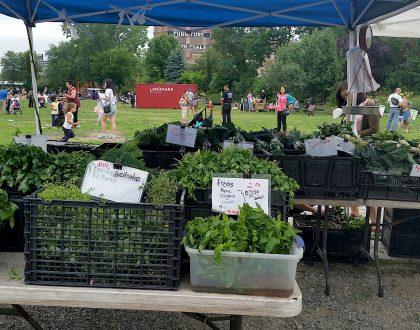 Astoria Greenmarket Will Not Return This Summer