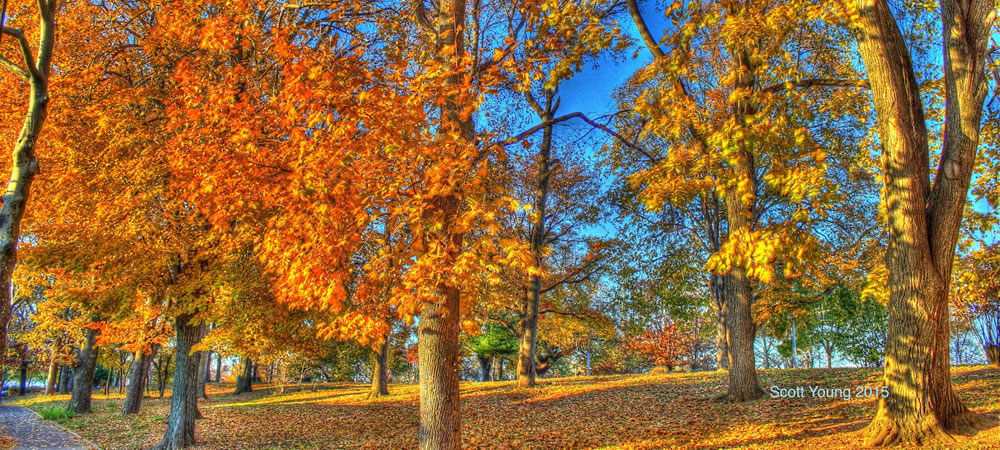 Astoria_Park_Fall_Painting_in_the_Park