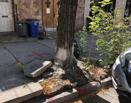 NYC's Repair of Tree damaged Sidewalks