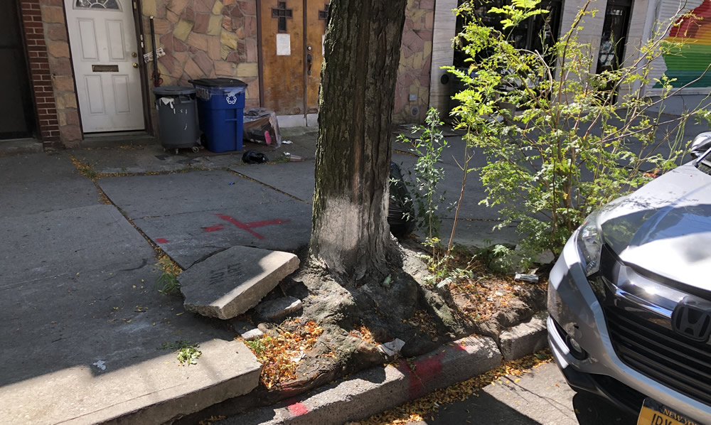 When Trees Attack Sidewalks, Homeowners Now Off the Hook
