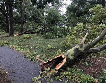 Astoria Park damage