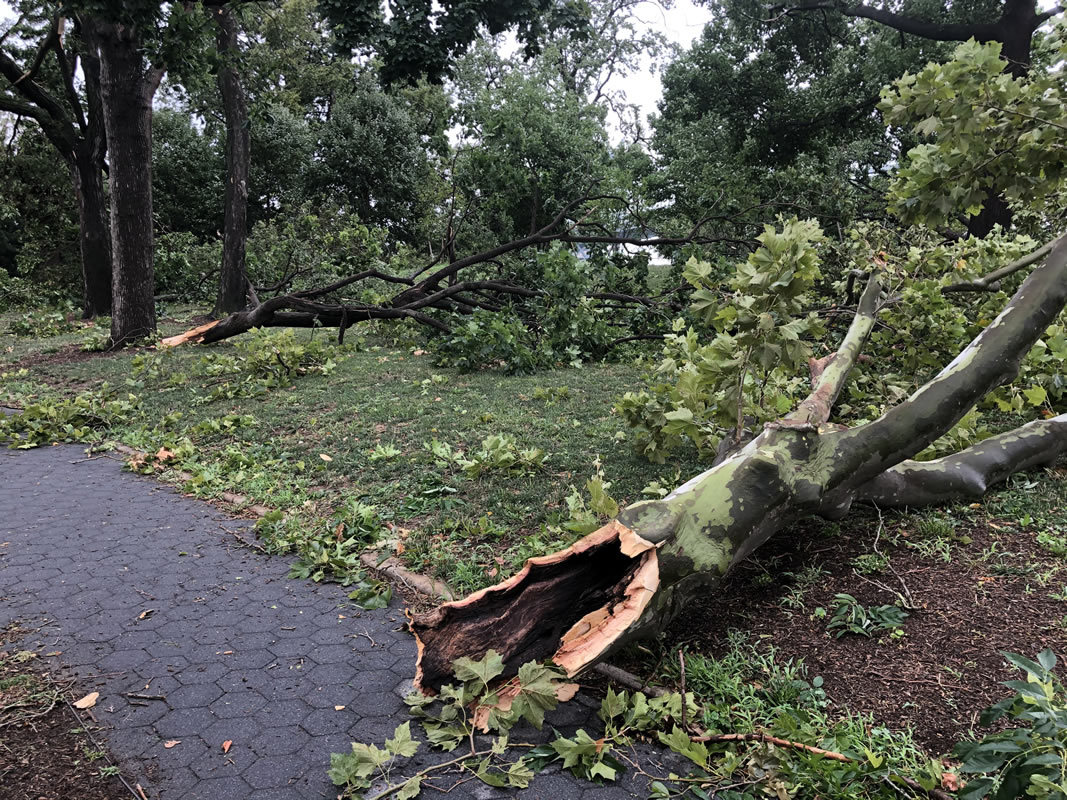 Astoria Park damage